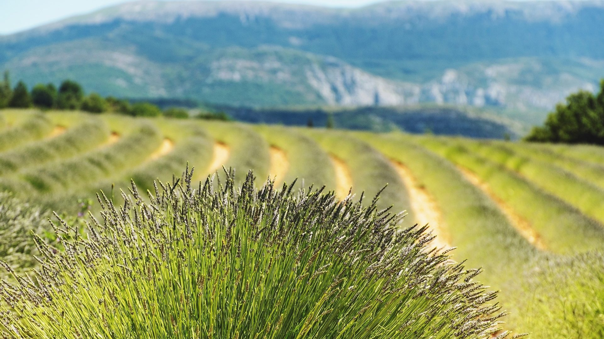 France-Obseques-Agence-Alpes-Haute-de-Provence